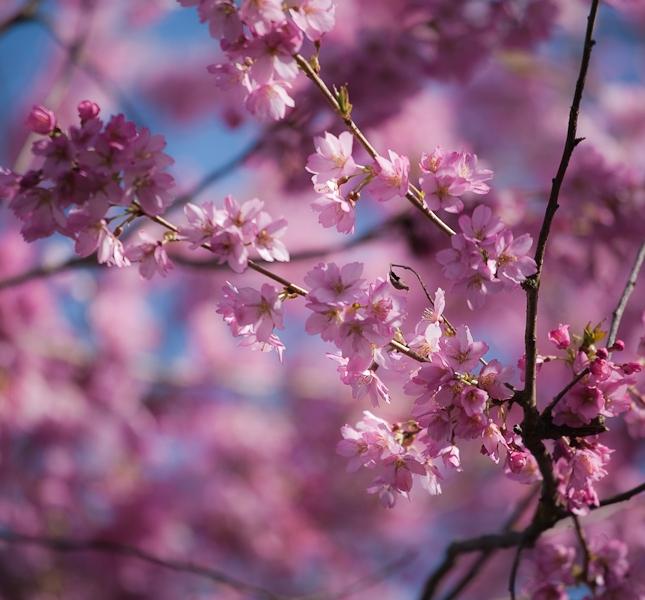 春天開花,小心妳臉上也花花